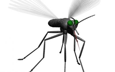 Louisiana Reports First Human West Nile Virus Cases for 2018